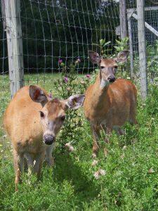 wholesale deer scents